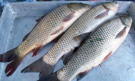 Три рыбы от святителя Николая. Рассказ.