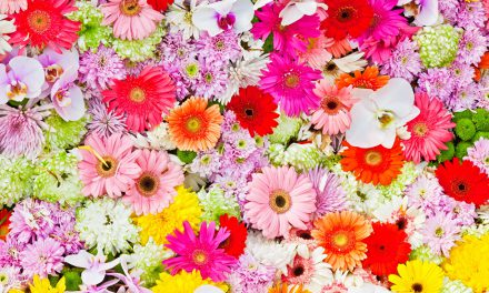 О цветах к празднику Преображения