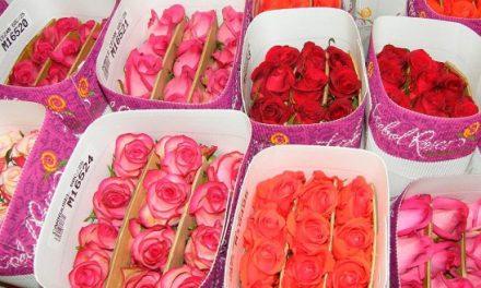 О цветах для украшения храма